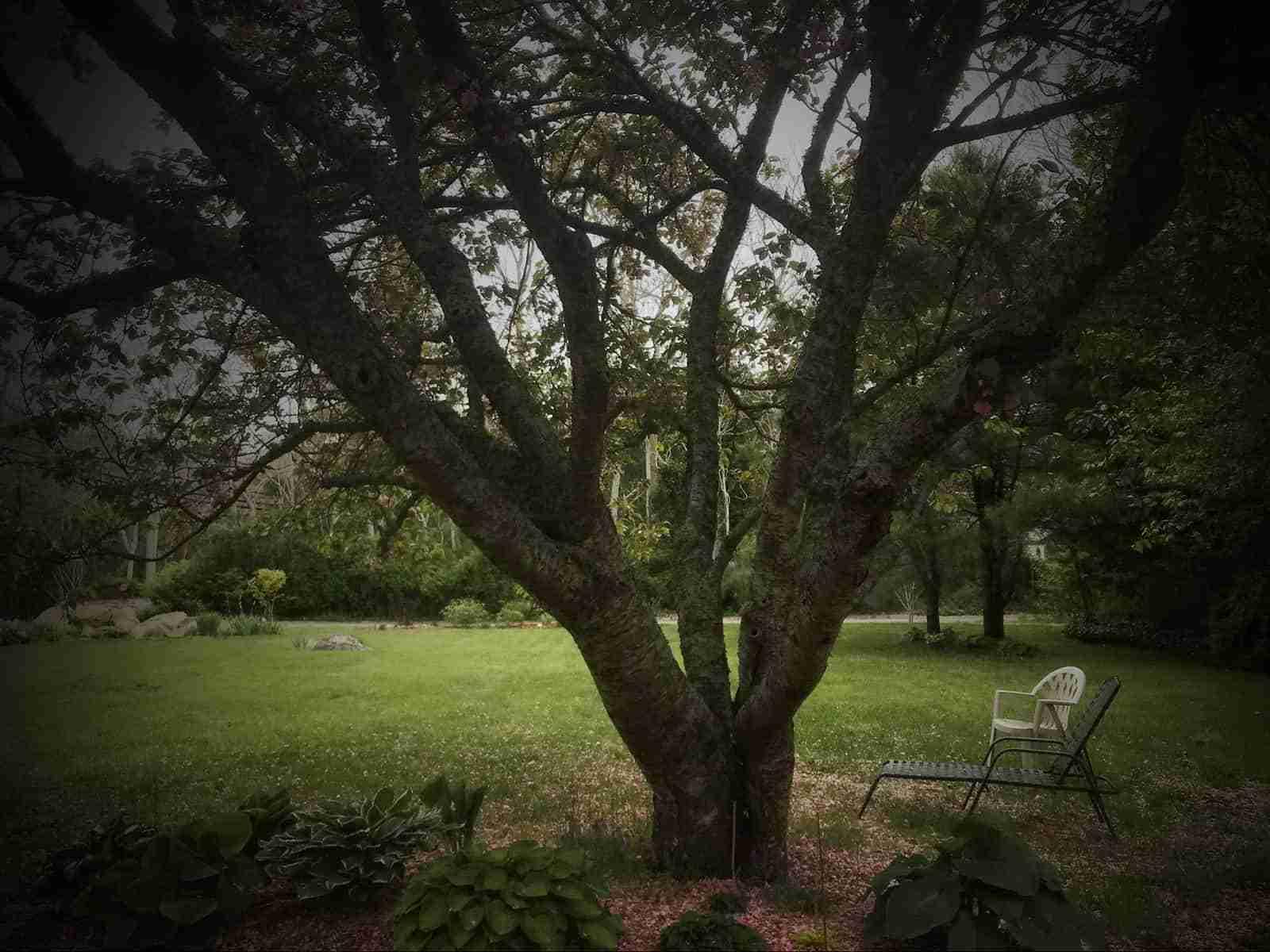 Cape Cod Garden Walk - Garden Memories Spring 2020