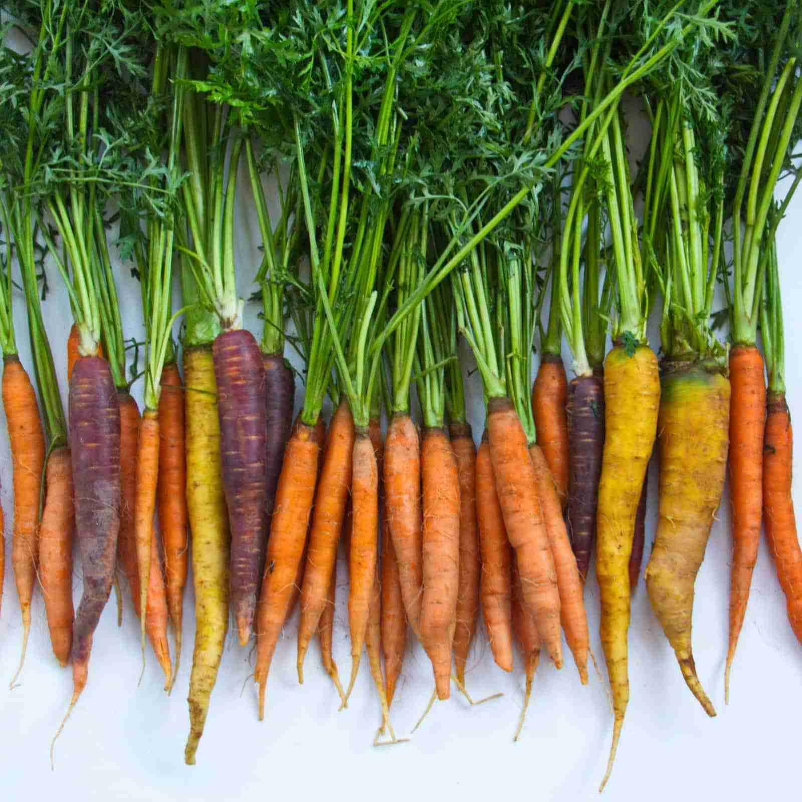 Cape Cod Farmers Market Carrots _0015