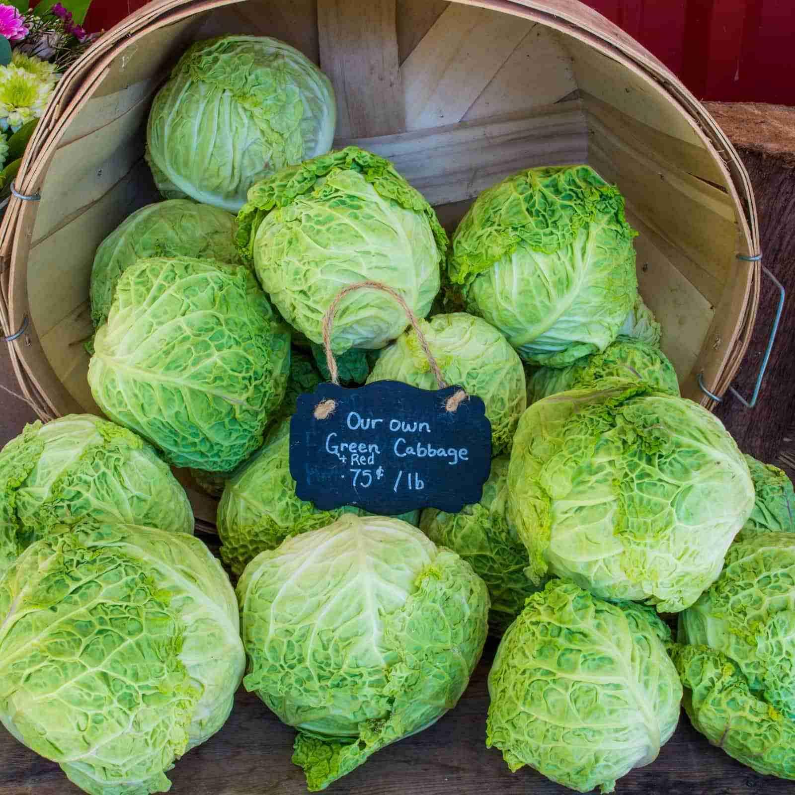 Cape Cod Farmers Market - vanessa-bucceri-unsplash