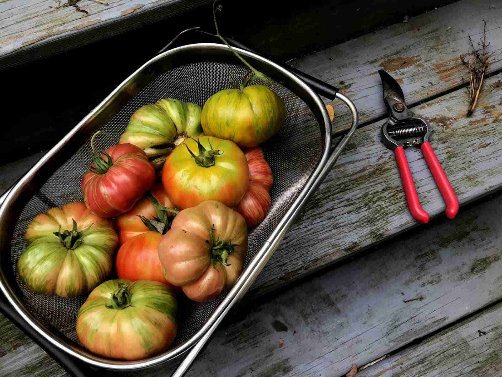Cape Cod Gardens - Brewster Tomatoes