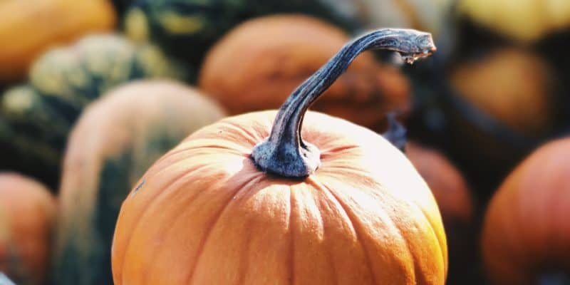 Cape Cod Halloween and Fall